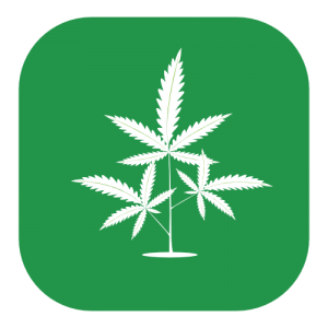 green icon of a cannabis plant